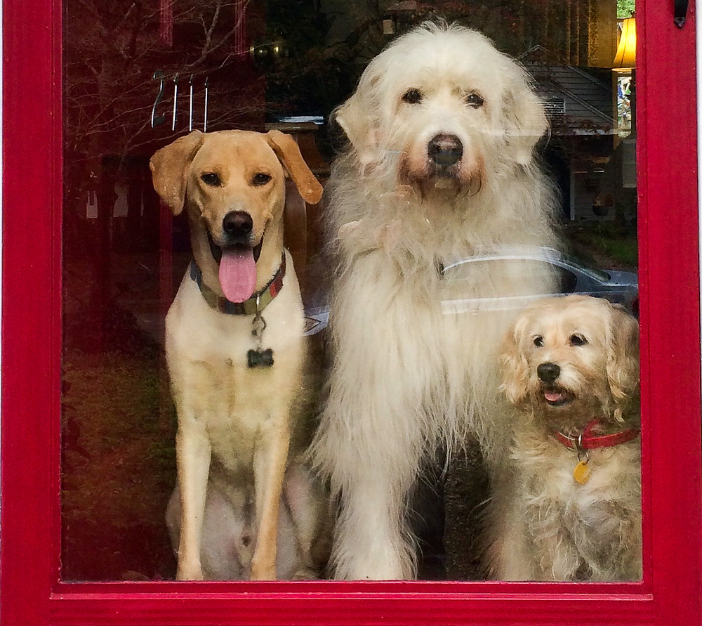 Image of 3 dogs looking out a window with red frame.