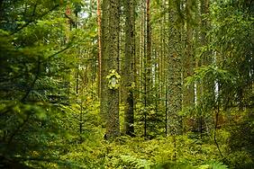 Selina Haas Wandbild Kuckuckuhr im Wald Kuckucksuhr am Baum Pop-Art