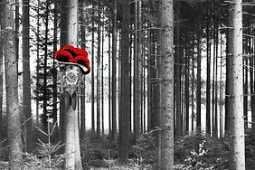 LP11B von selina haas, Bestseller, Wandbild, Moderner Schwarzwald, Kuckucksuhr, Bollenhut, Schwarz, weiß, rot, Wald, Kuckucksuhr, Wald mit Kuckucksuhr, Baum mit Kuckucksuhr, Baum, Kuckucksuhr am Baum