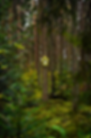 Selina Haas LP49 Kuckucksuhr im Wald Waldbild Leinwand