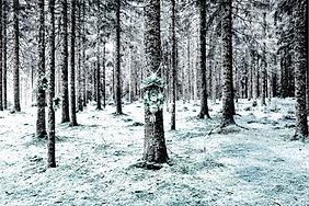 Leinwand-Druck LP45 von Designerin Selina Haas