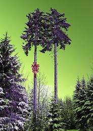 Leinwand-Druck LP 10 von Designerin Selina Haas