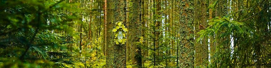 LP49-Q Selina Haas Panormabild Wandbild Schwarzwald Kuckucksuhr im Wald
