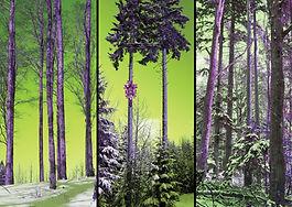 Leinwand-Druck LP 24 von selina haas, Bestseller, Wandbild, Moderner Schwarzwald, Kuckucksuhr, grün, lila, pink, Wald, Kuckucksuhr, Wald mit Kuckucksuhr, Baum mit Kuckucksuhr, Baum, Kuckucksuhr am Baum