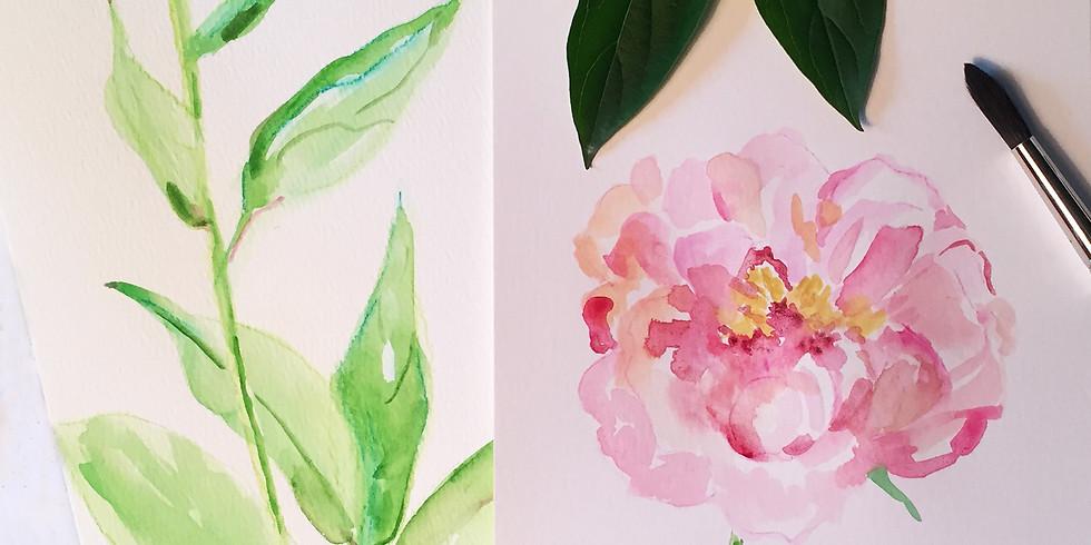 Peonies Sketch / Paint