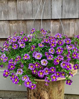Uno Violet Star.jpg