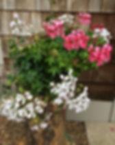 cascade soft sofie.jpg