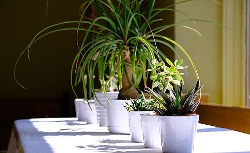 houseplants-by-the-window-compressor.jpg