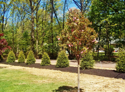 Benefits of Trees On Your Property