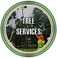 Tree Service in Somerset, New Jersey