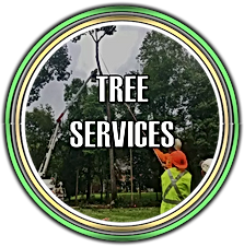 Tree Services in Somerset, NJ
