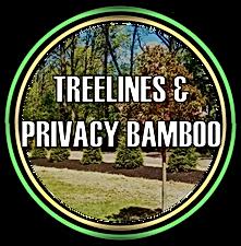 Treelines & Privacy Bamboo in Somerset, NJ