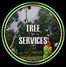 Tree Service in Somerset NJ