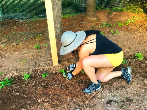 Gardens on the Rise amid Pandemic!