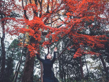 11/22 (金)紅葉散る晩秋の里山 松崎友紀舞踊撮影会