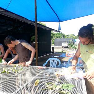 Harvesting plants