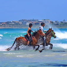 Horse riding A once in a lifetime experience at Pearly Beach Horse Trails. Breath taking beach rides. The stuff dreams are made of. We will be happy to assist you.