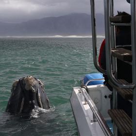 Ivanhoe sea safaris whale watching tours