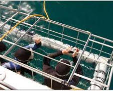Shark cage diving Gansbaai is world famous for shark cage diving and for seeing the Great White sharks. To better understand the plight of these amazing creatures a shark cage dive can be arranged.