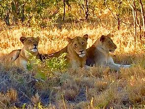 Lion Trio.jpg