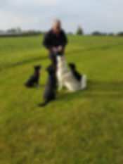 Dog Walking, Will-B-Walking