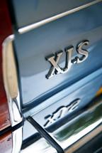 jagcots48pt.jpg