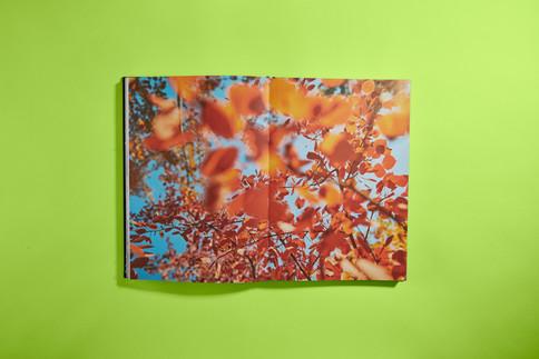 ThatBook_Ault2737.jpg