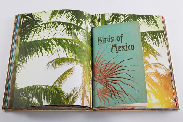 ThatBook_Mexico_200.jpg