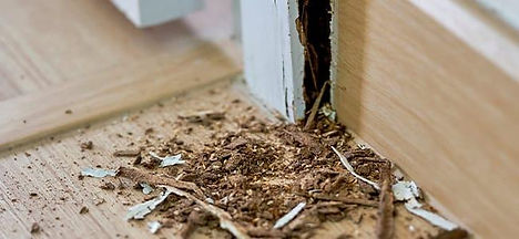 termite-infestation-in-winter-washington