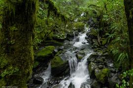 Selva de Nueva Zelanda