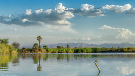 Libelula en el lago