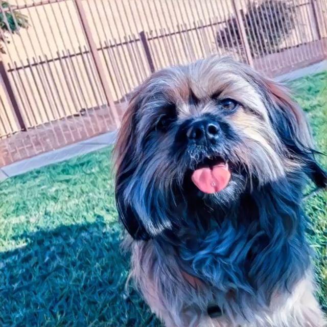 Yoooo _#yodogwalker #losfeliz #losangeles #la #instadogs #dog #echopark #_atwatervillage #silverlake
