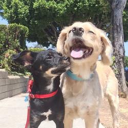 Kissing k9s__#yodogwalker #losfeliz #losangeles #la #instadogs #dog #echopark #atwatervillage #silve