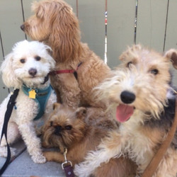 Squad__#yodogwalker #losfeliz #losangeles #la #instadogs #dog #echopark #_atwatervillage #silverlake