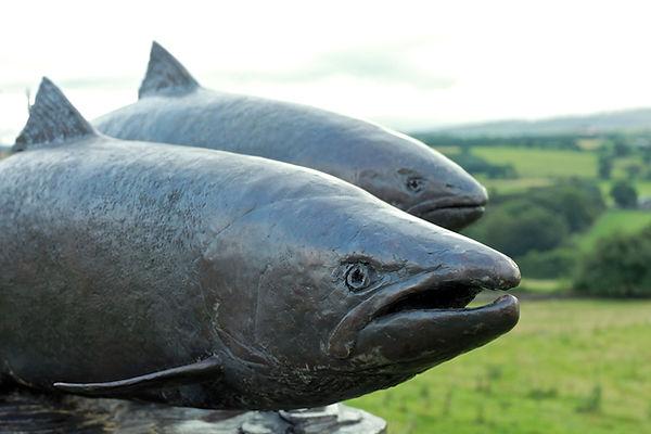 The Eden Salmon - David Williams-Ellis