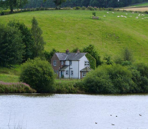 Abbot Moss in Cumbria