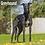 Thumbnail: 2021 Greyhound Calendar