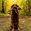 Thumbnail: Fluff & Tuff Countryside Ike Pheasant