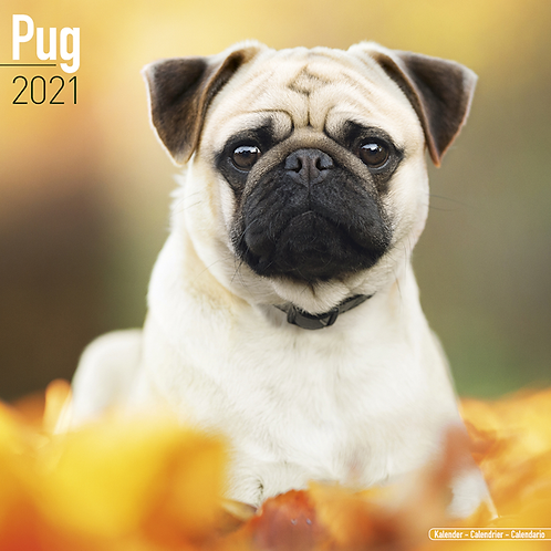 2021 Pug Calendar