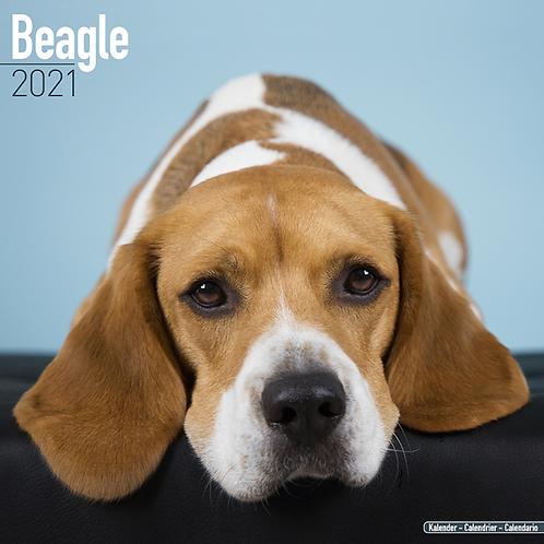 2021 Beagle Calendar