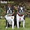 Thumbnail: 2021 Boston Terrier Calendar