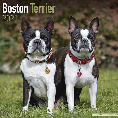 2021 Boston Terrier Calendar