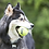 Thumbnail: Kong Airdog® Squeaker Tennis Ball. Price from