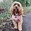 Thumbnail: Ollybyso Nougat Dog Harness