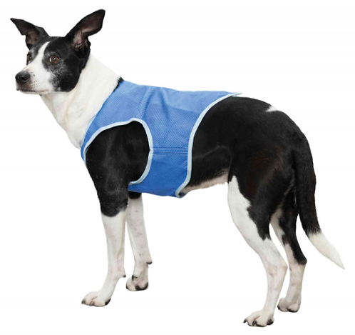 Cool Vest For Dogs