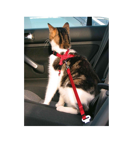 Car Harness For Cats