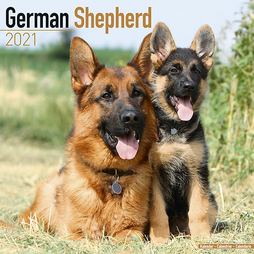2021 German Shepherd Calendar