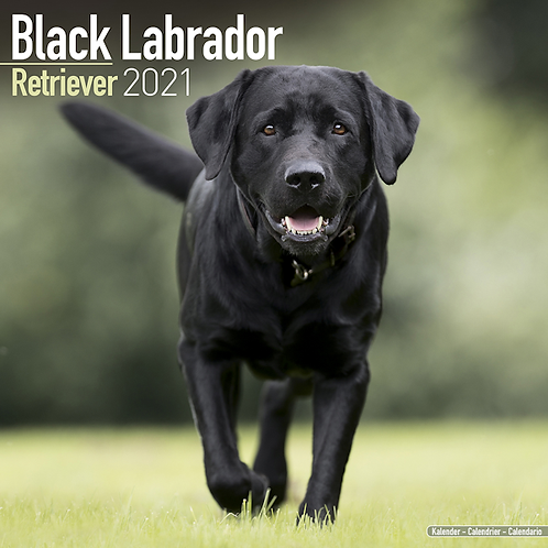 2021 Black Labrador Calendar