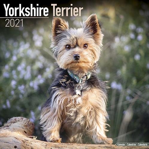 2021 Yorkshire Terrier Calendar