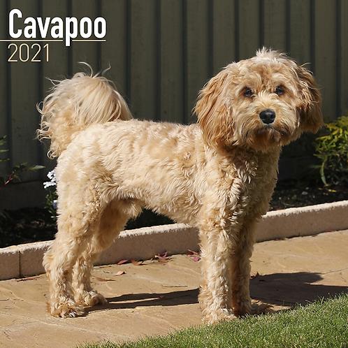 2021 Cavapoo Calendar